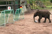 20110716_elefant02