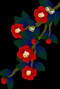 Camellia001