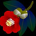 Camellia002