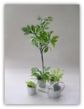 ミニチュア植物