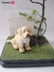 Goldenretriever_welpe02m