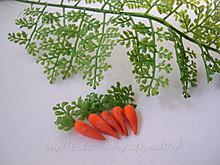 Kleingarten_carrot_m