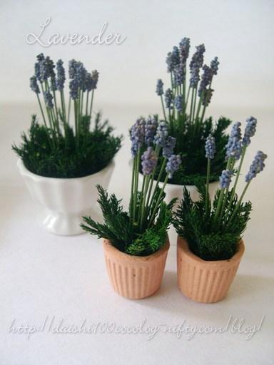 Lavender02_m