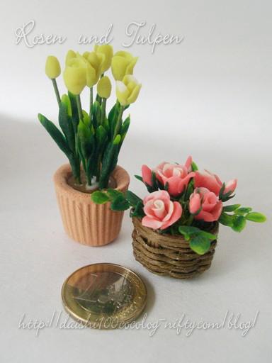 Rose_tulip2_m