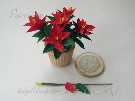 Poinsettia01m