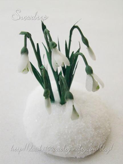 Snowdrop02m