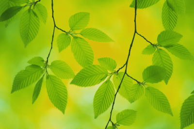 Image_green_leaves