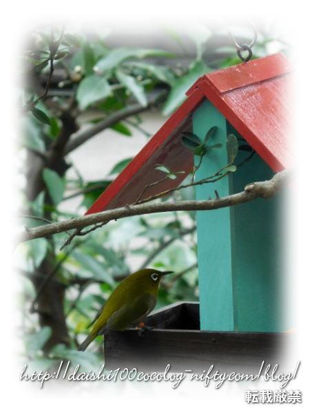 Bird_feeder13