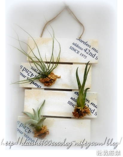 Air_plants_daiso