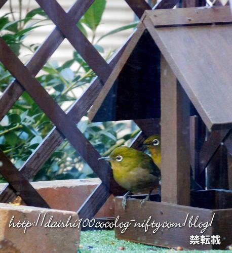 Bird_feeder16