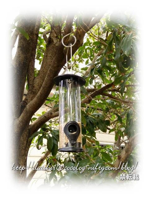 Bird_feeder25