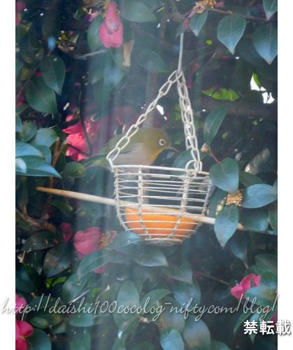 Bird_feeder32