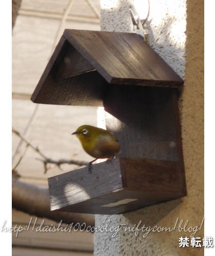 Bird_feeder33