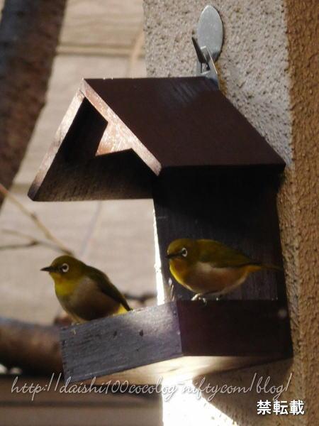 Bird_feeder34