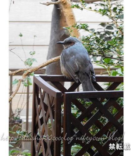 Bird_feeder36