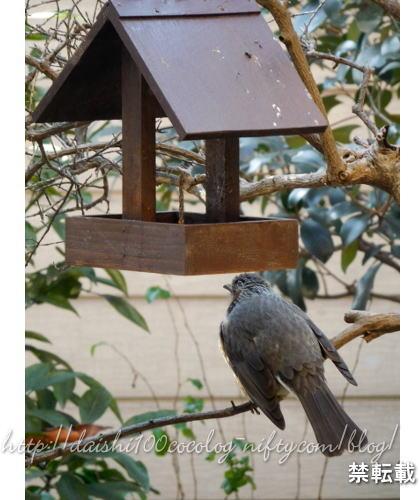 Bird_feeder37