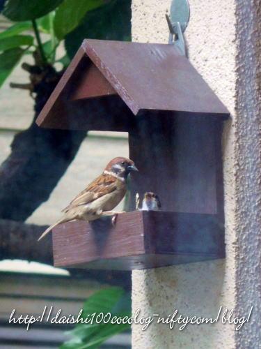 Bird_feeder38