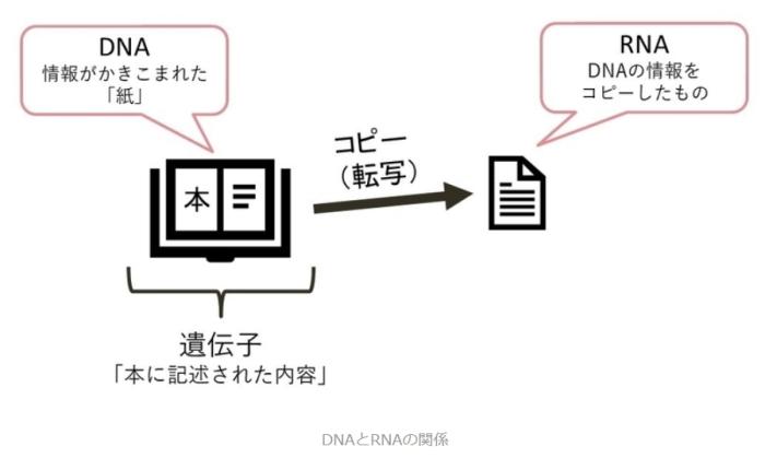 20200403_rna_dna02